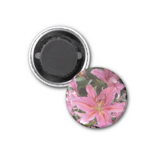 Pink Lilies Round Magnet
