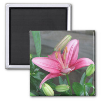 Pink Lily 2 Inch Square Magnet