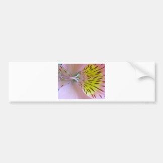 Pink lily bumper sticker