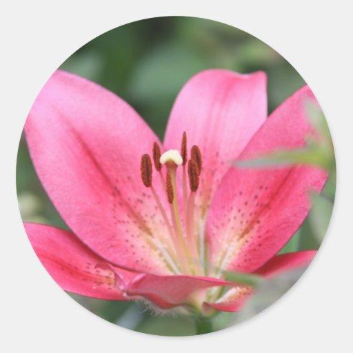 Pink Lily Classic Round Sticker