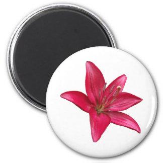 Pink Lily Flower Blossom  Close Up Refrigerator Magnets