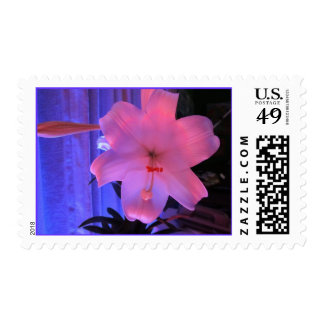 Pink Lily Flower Stamp