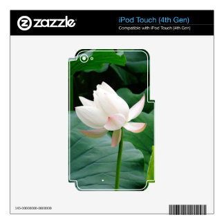Pink Lily iPod Touch 4G Skin