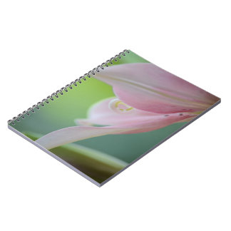 Pink Lily Note Books