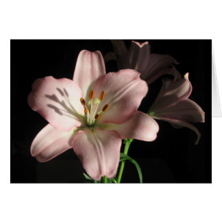 Pink Lily Note Card