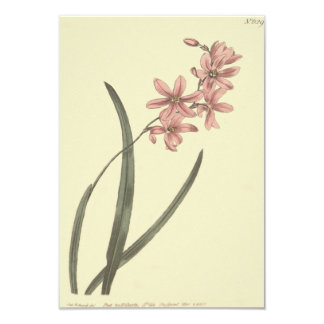 Pink Lily of The Valley Illustration Card