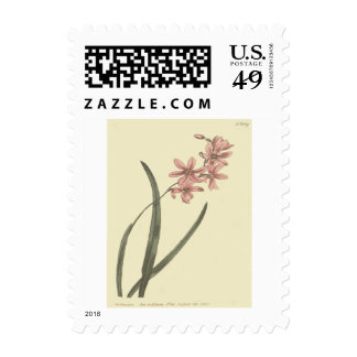 Pink Lily of The Valley Illustration Postage