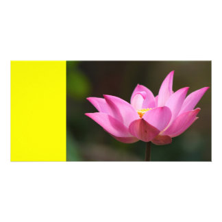 Pink Lily on Yellow Card