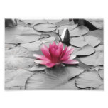 Pink lily pad flower photographic print