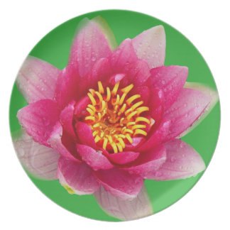 Pink Lily Plate