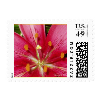 Pink Lily Postage Stamp