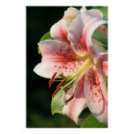 Pink Lily! Print