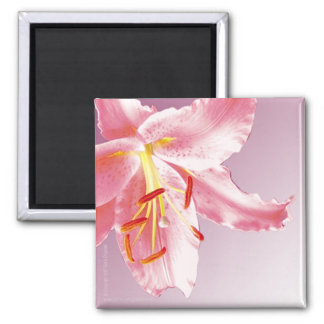 PINK LILY Sq Magnet
