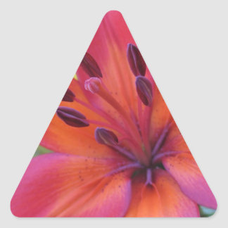 Pink Lily Triangle Sticker