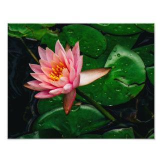 Pink Lilypad Photo Print