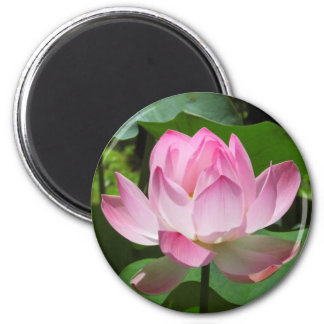 Pink Lotus Bloom Refrigerator Magnet