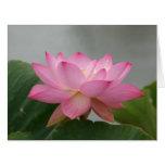 Pink Lotus Blossom Large Greeting Card