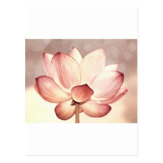 Pink Lotus Blossom Postcard