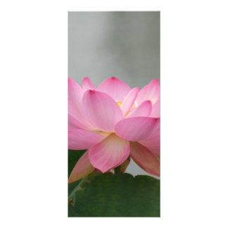 Pink Lotus Blossom Rack Card