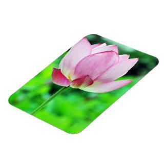 Pink Lotus Blossom Rectangular Photo Magnet