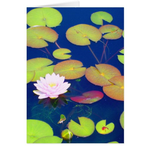 Pink Lotus Flower floating with lily pads on pond Card