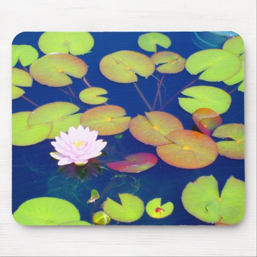 Pink Lotus Flower Floating With Lily Pads On Pond Mouse