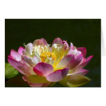 Pink Lotus Flower Greeting Card