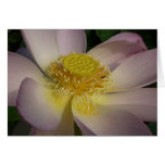 Pink Lotus Flower I Beautiful Peaceful Floral Card