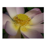 Pink Lotus Flower I Beautiful Peaceful Floral Postcard
