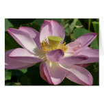 Pink Lotus Flower II Peaceful Floral Card