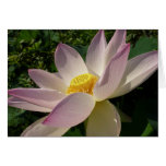 Pink Lotus Flower III Elegant Water Floral Card