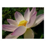 Pink Lotus Flower III Elegant Water Floral Poster