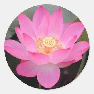 Pink Lotus Flower In Bloom Classic Round Sticker