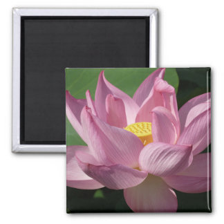 Pink Lotus Flower IV Beautiful Floral 2 Inch Square Magnet