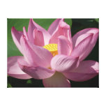 Pink Lotus Flower IV Canvas Print