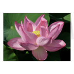 Pink Lotus Flower IV Card