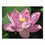 Pink Lotus Flower IV Photo Print