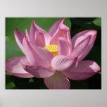 Pink Lotus Flower IV Poster