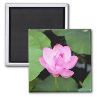 Pink lotus flower 2 inch square magnet