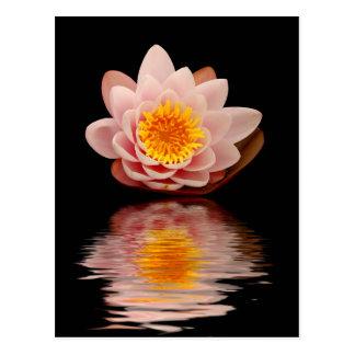 Pink Lotus Flower Postcard