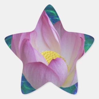Pink lotus flower star sticker