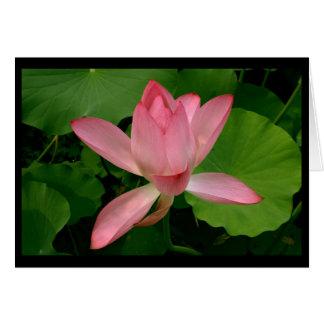 Pink Lotus in Bloom Greeting Card