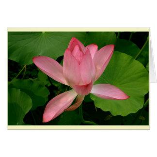 Pink Lotus in Bloom Greeting Card (light border)