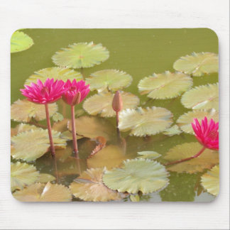 Pink lotus lilies mouse pad