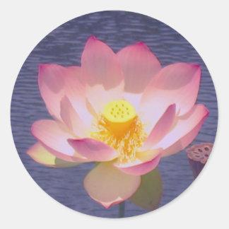 PInk Lotus on Water Calm Sticker