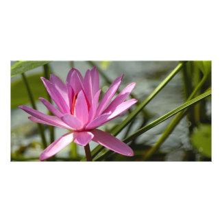 Pink lotus photo card