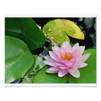 Pink Lotus Photo Art
