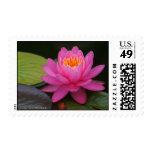 Pink Lotus Postage Stamp