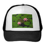 Pink lotus water lily flower  garden, hats