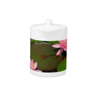 Pink lotus water lily flower  garden, teapot